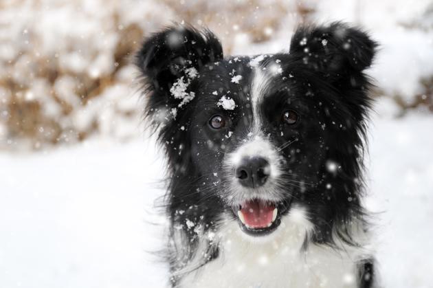 chien dans la neige qui a froid