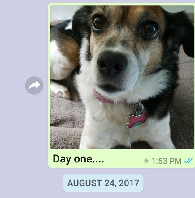 chien sms