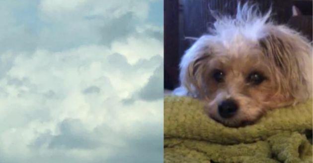 Son chien meurt : ce qu'elle voit dans les nuages fait pleurer le monde entier