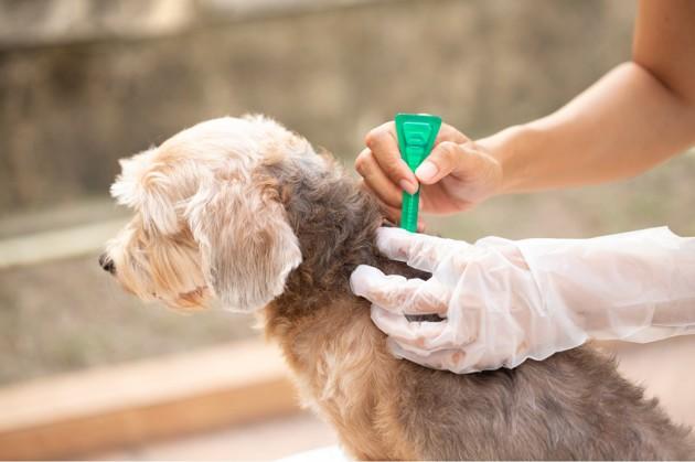 Maladie de la peau chez le chien : causes et traitements des dermatoses