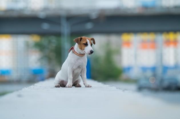Baromètre I-CAD : en France, un chien ou un chat est déclaré perdu toutes les 7,6 minutes !