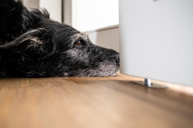 chien qui attend son maître