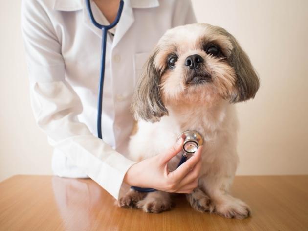 Arthrose du chien : quels traitements pour soulager la douleur ?