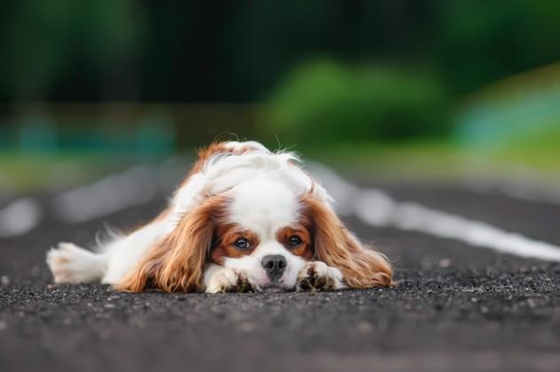 « La souffrance n'est pas une fatalité » : un spécialiste donne des conseils pour soulager un animal âgé qui souffre