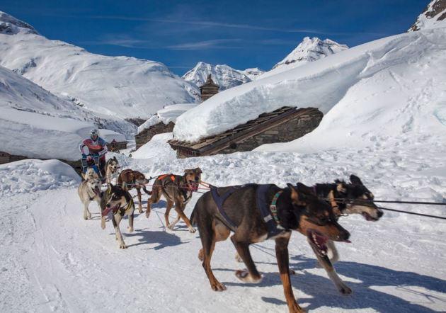 La France accueille les championnats du monde de traîneau à chiens et skidog cette année !