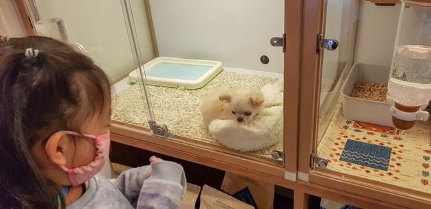 Acheter ou adopter un chiot : combien ça coûte ?