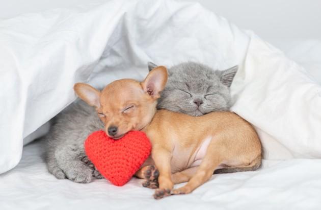 chien et chat qui dorment