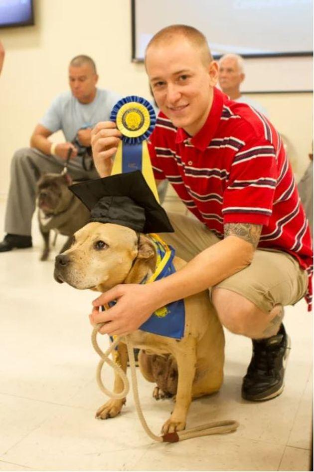 Chien de combat puis destiné à l'euthanasie, ce Pitbull savoure sa 2e chance