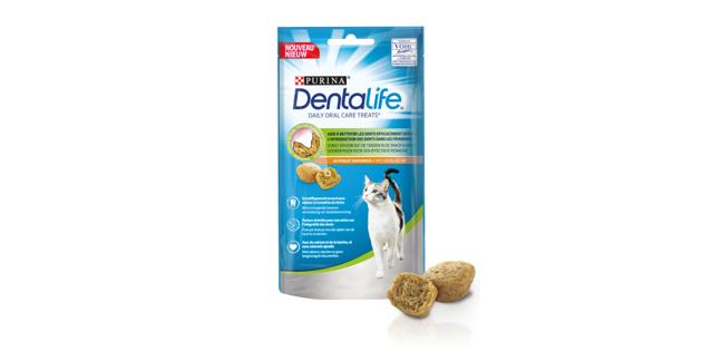 Grâce à ce réflexe quotidien très simple, votre chat aura des dents en pleine santé !