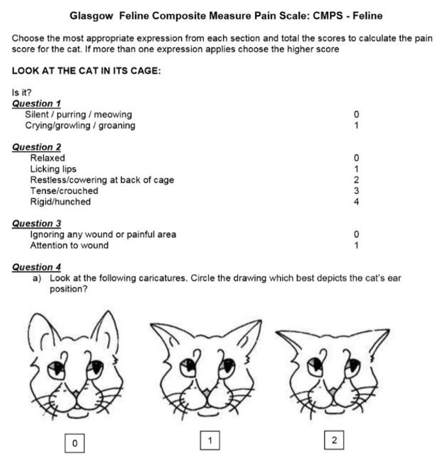 Comment savoir si mon chat a mal ?