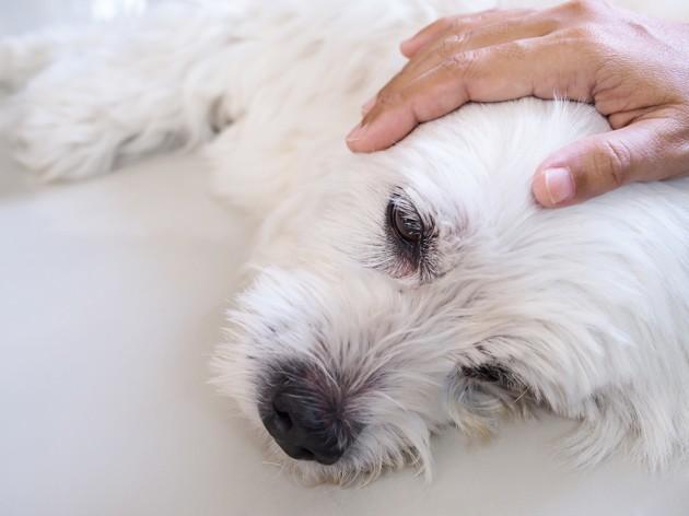 CAPdouleur : la douleur de nos animaux de compagnie n'est pas une fatalité et il faut