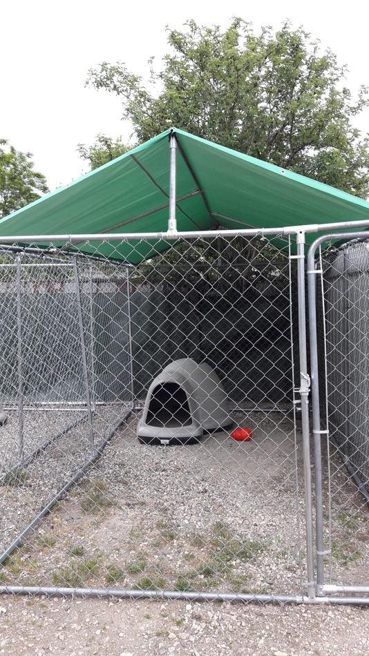 Covid-19 : Wamiz s'engage pour les refuges en offrant des chenils en kit pour sauver plus de chiens !