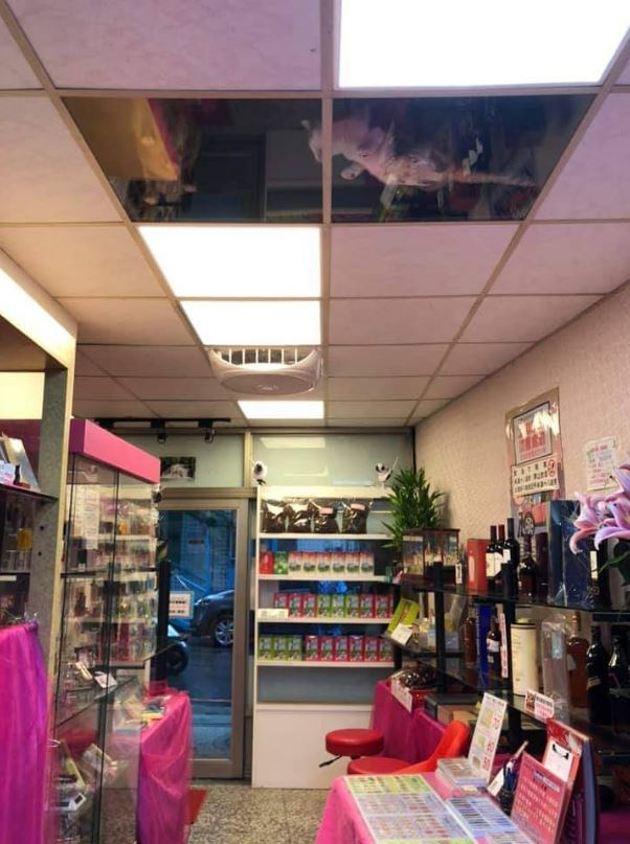 Il entre dans une épicerie et regarde au plafond : les quatre yeux qui le fixent lui font pousser un cri de surprise !