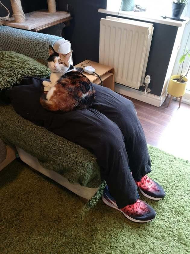 Ce couple a trouvé une totalement astuce inédite pour gérer leur chat beaucoup trop collant !
