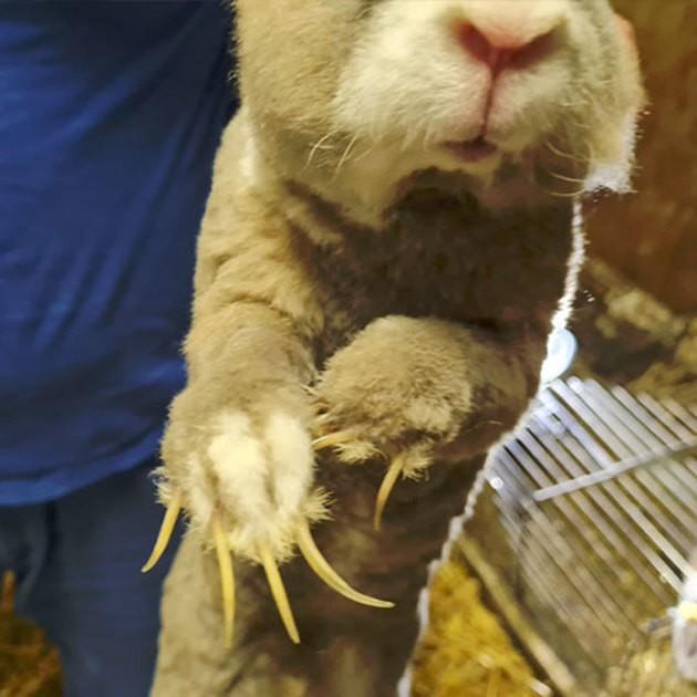 Abandonnés depuis 10 jours à Rouen, 4 lapins, un chien et des oiseaux ont été sauvés par la Fondation Brigitte Bardot