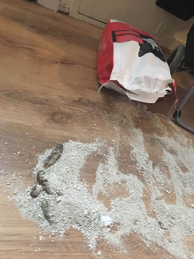 Sa litière n'est pas accessible, ce chat a la meilleure réaction !