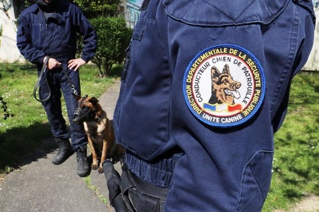 Calvados : un chien Malinois maltraité est sauvé et débute une nouvelle vie au sein de la police nationale