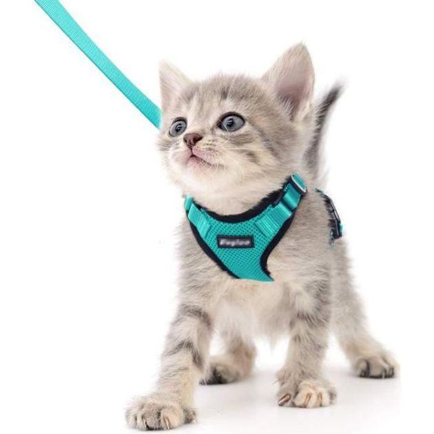 Notre sélection de harnais pour chat à moins de 20 euros