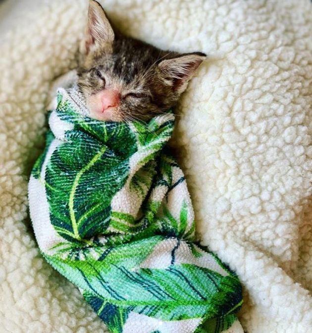Condamné à l'euthanasie, ce chaton aveugle a eu droit à une incroyable seconde chance
