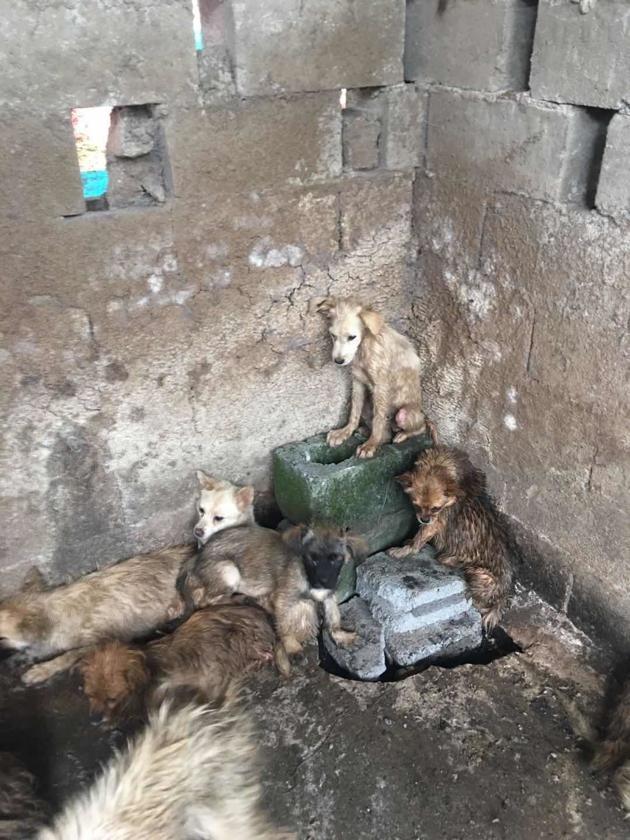 62 chiens sauvés d'une mort certaine lors du festival de la viande de chien à Yulin
