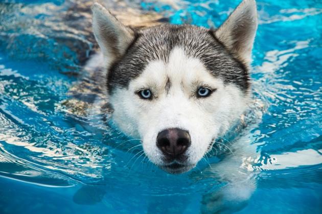 Arthrose du chien : Des traitements naturels existent-ils ?