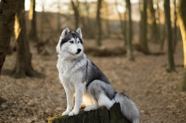 Arthrose du chien : Quelles races sont les plus à risque ?