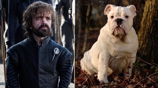 Et si vos personnages préférés de Game of Thrones étaient des races de chiens ?