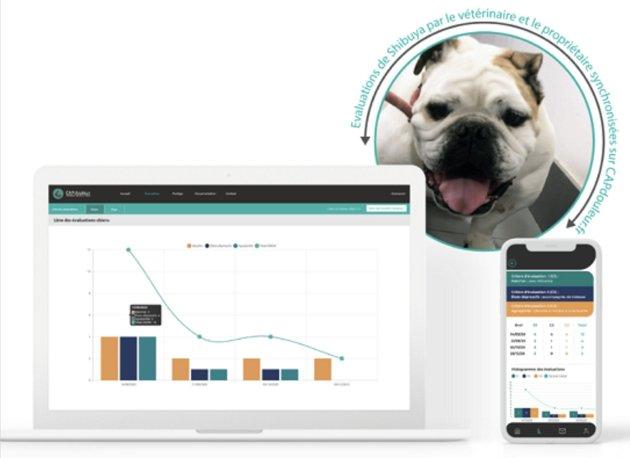 Souffrance animale : CAPdouleur lance une application pour un meilleur suivi de la santé de votre animal