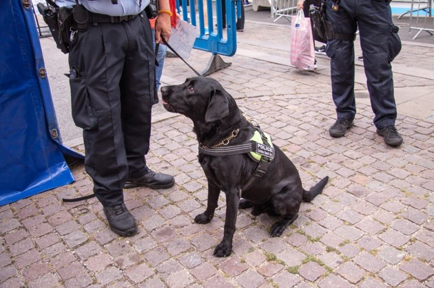 Interview de Maitre Desvallon sur les chiens de travail :