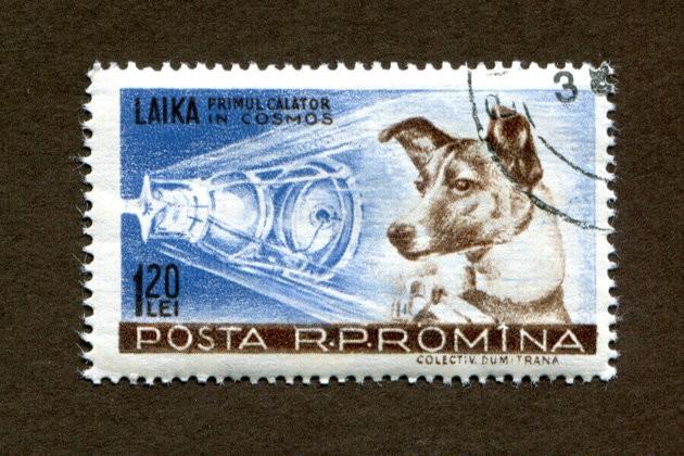 50 ans du premier pas de l'Homme sur la Lune : hommage à Laïka, premier chien dans l'espace