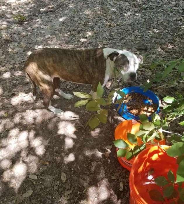 Disparu pendant 8 ans, ce chien n'en revient pas de retrouver ses maîtres (et vice versa)
