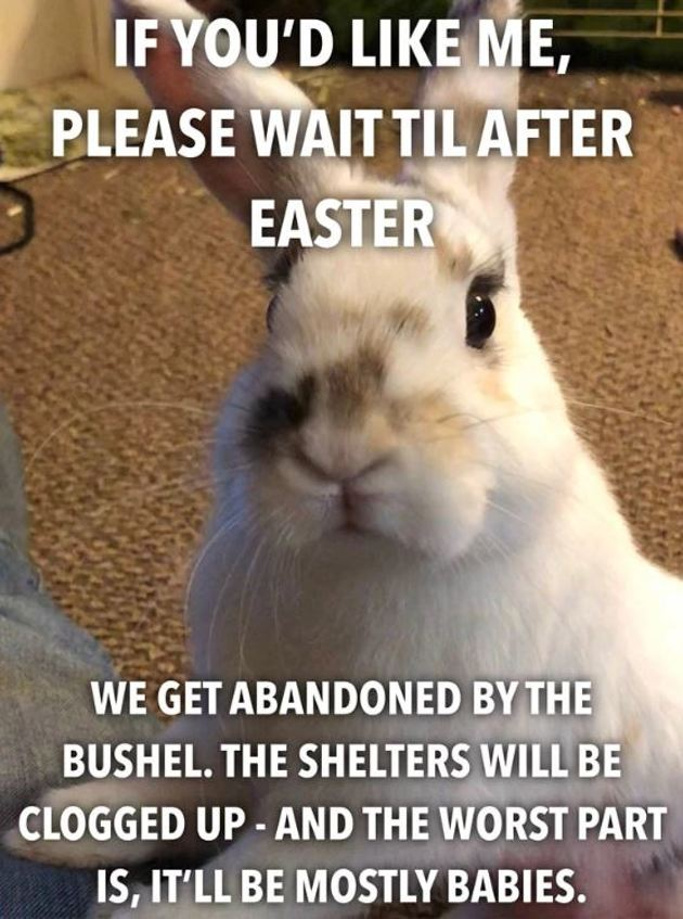 Cette propriétaire de lapin explique pourquoi il ne faut pas acheter de lapin juste avant Pâques