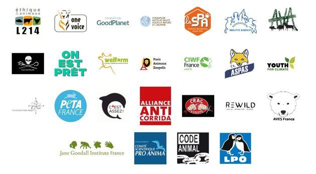 Référendum pour les animaux : un ambitieux projet de loi citoyen contre la cruauté animale voit le jour