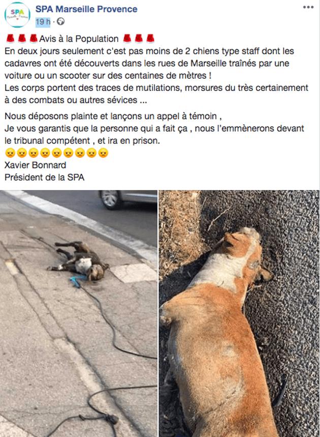 Cauchemar à Marseille : deux cadavres de chiens traînés par des voitures retrouvés !