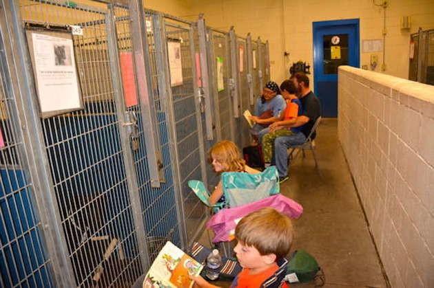 Les volontaires tenant compagnie aux chiens