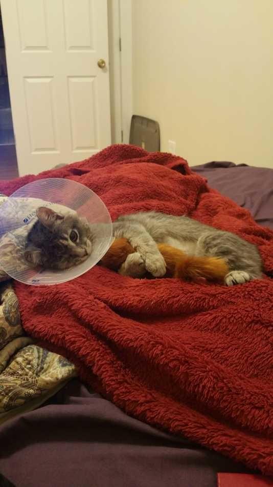 Pendant une tempête, ce chat a perdu un œil mais trouvé l'amour