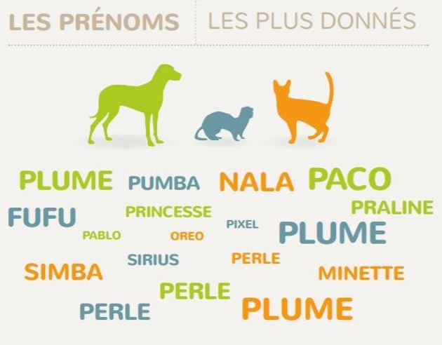 noms les plus donnés aux chiens en 2019 selon l'i-cad