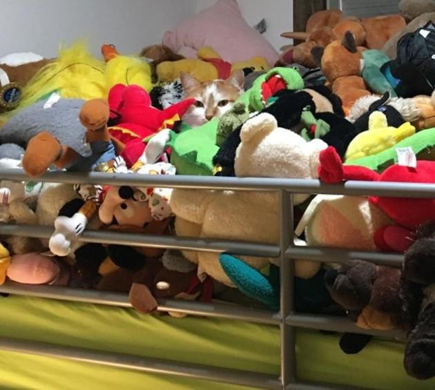 Un chat se cache (très bien) sur ce lit : très peu de personnes parviennent à le trouver !
