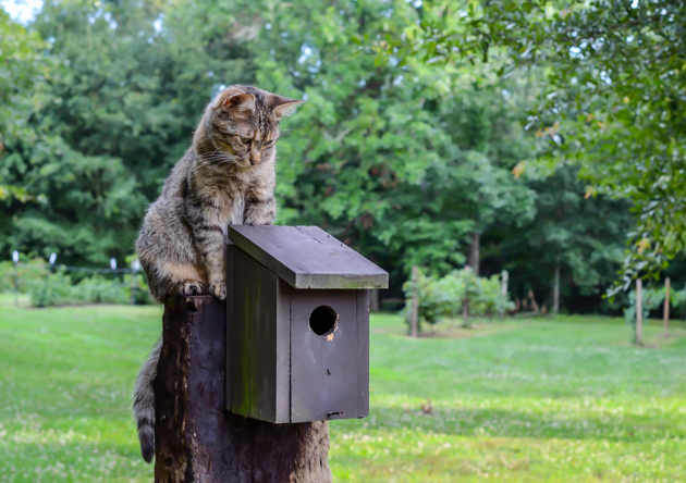 Comment nourrir les oiseaux cet hiver sans nourrir votre chat avec ?