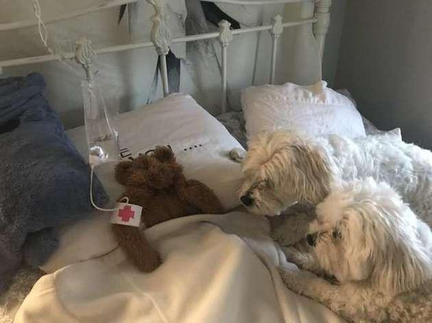 ours hôpital