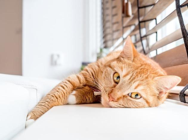 Les chats et les fenêtres : attention danger !