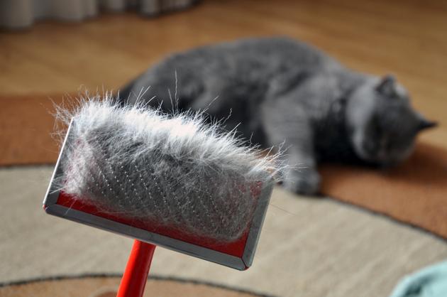 5 conseils pour faire face à la mue du chat au printemps