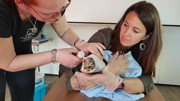 Premiers secours canin et félin : comment se former au secourisme animalier ?
