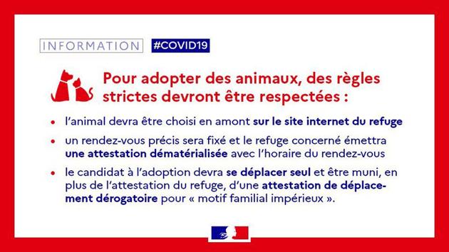 Coronavirus : les déplacements pour adopter dans les refuges autorisés à partir du 16 avril !