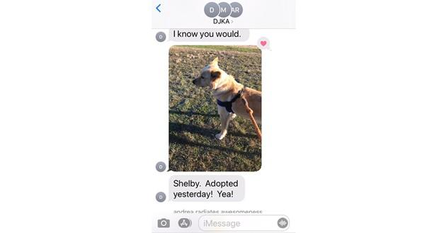 Les photos de ce père de famille qui promène des chiens de refuge font le tour du web