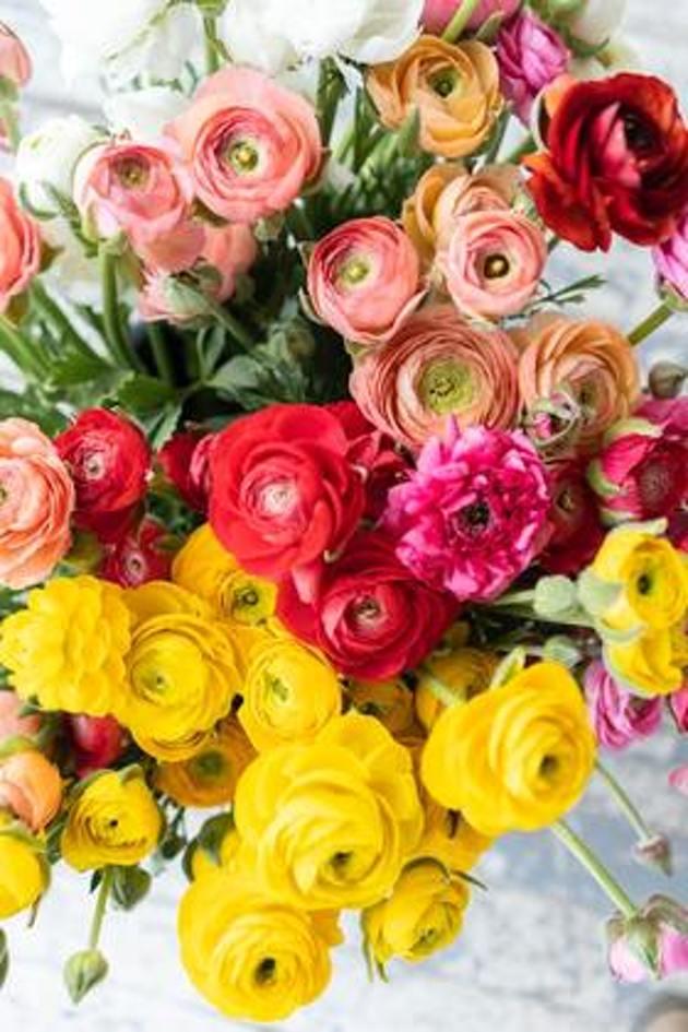 roses de toutes les couleurs