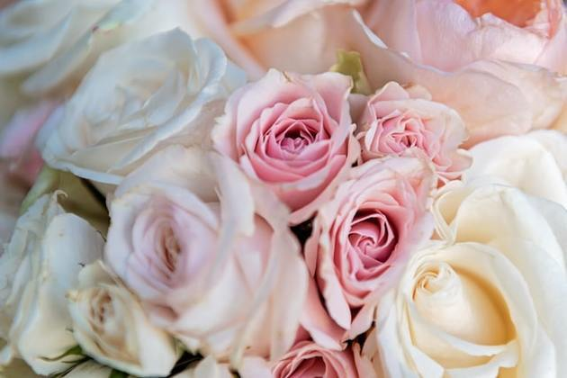 roses roses claires