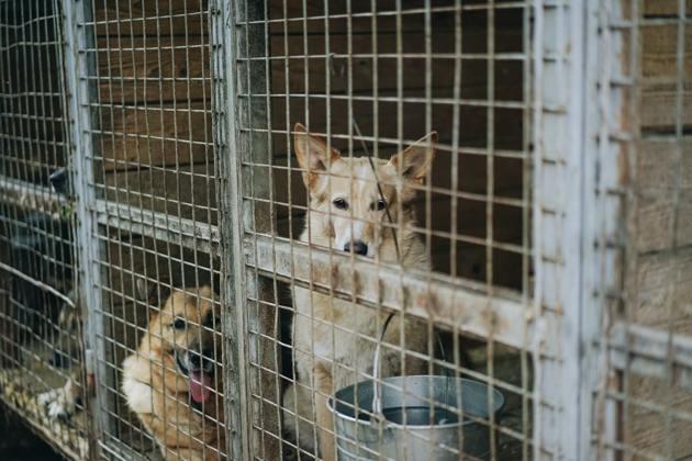 Deux chiens dans un box de refuge