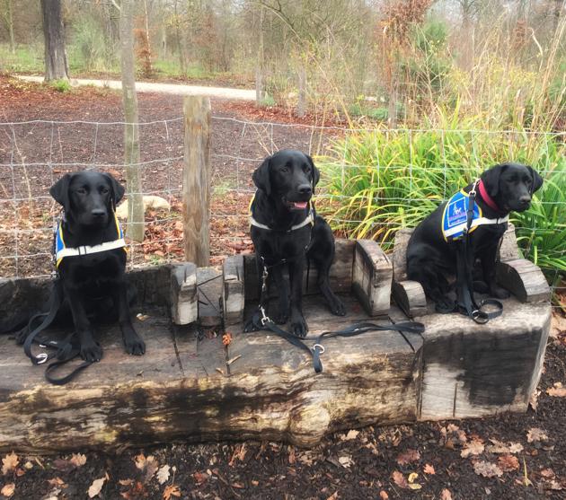 Témoignage d'Audrey, famille d'accueil pour chiens guides en formation :