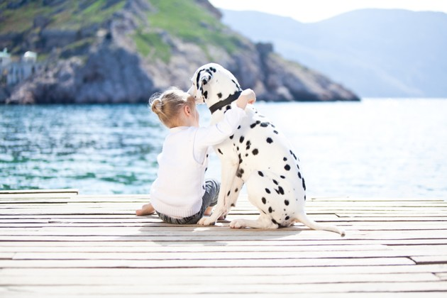 Coup de soleil chez le chien : comment l'éviter et le soigner ?